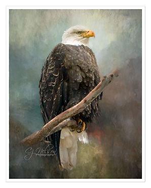American Bald Eagle Wildlife preserve