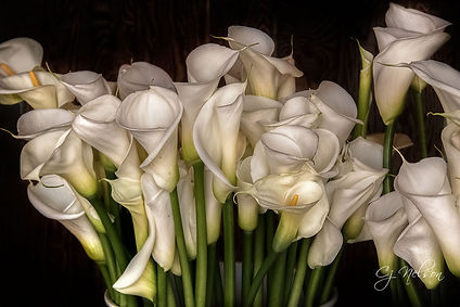 CaliLilies, flowers, exotic flowers, White lilies, lily, lillies