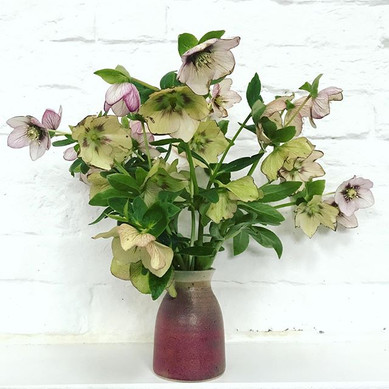 Hellebore stems from the garden- these h