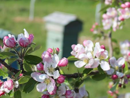Spring Greetings!