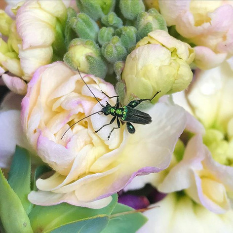 What a beauty 💚  #beetle #flowersfromth