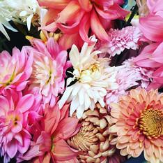 Dahlias and chrysanthemums still going s