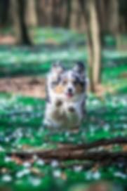 Miriams Hundeshooting 1 Wasserzeichen.jp