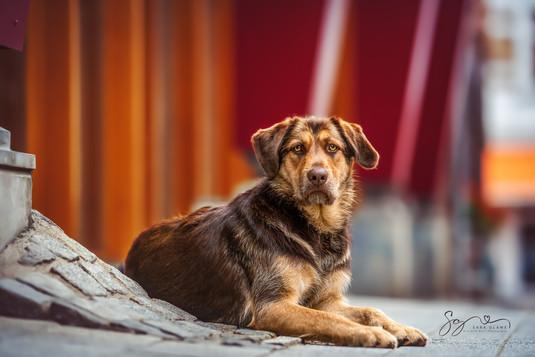 Hundefotograf im Wurm Schwerin