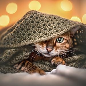 Katzenportraits