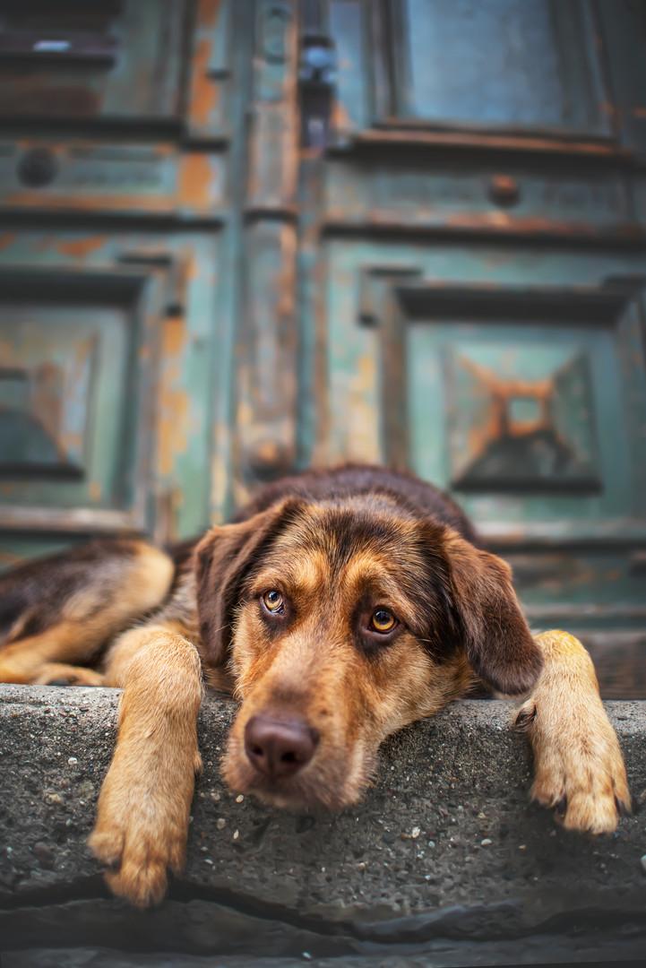 City Dog Shooting Schwerin