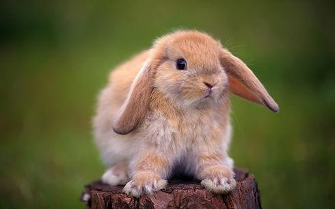 rabbit_tree_stump_ears_beautiful-1072111