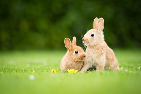 rabbits_grass_flowers-1806799.jpg!d.jpg