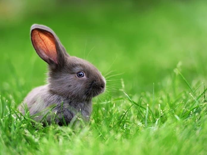 adorable-animal-baby-background-beautifu