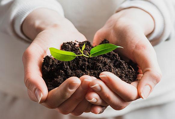 В питомнике начался этап посадки растений!