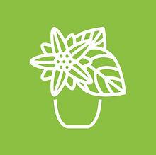 Room_plants.jpg