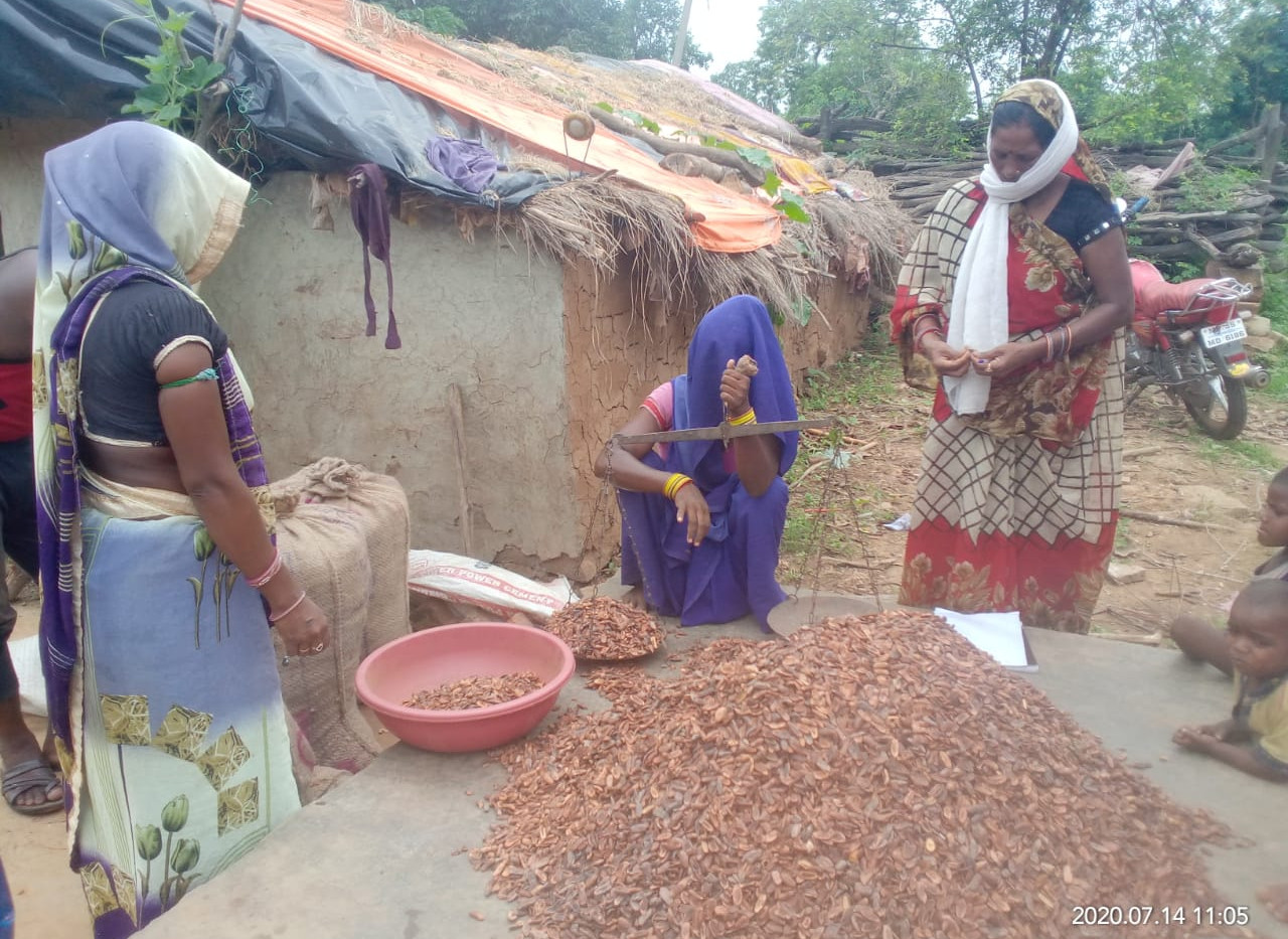 Forest Products  collected by Women