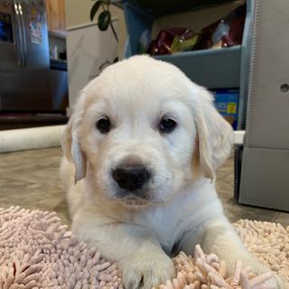 Puppy 6 weeks