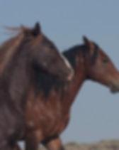 Mustang-2-5.jpg