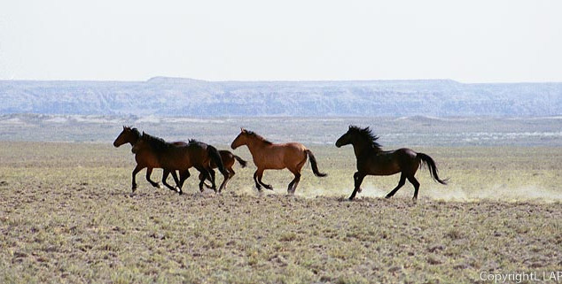 Rush hour in the Red Desert