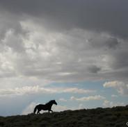 Big Wyoming sky