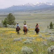 Ride amongst the wildflowers