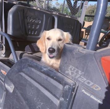 Riding in the ATV
