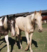 Horses1_edited.jpg