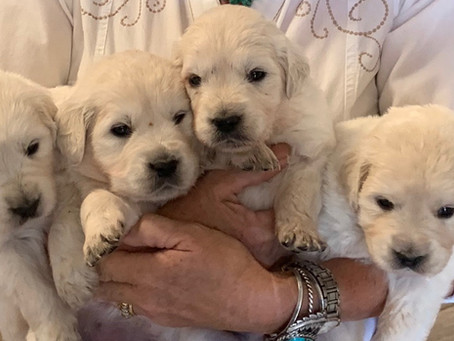 10 Puppy Purchases Before Puppy Arrives