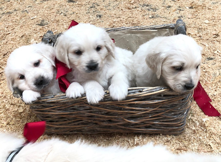 Puppy Prep | 7 Things To Do Before Bringing Your New Puppy Home