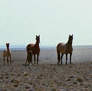 Mustangs on the west horizon