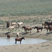 While back at the watering hole