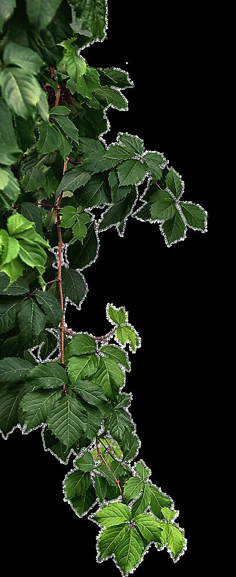 leaf seperate.png