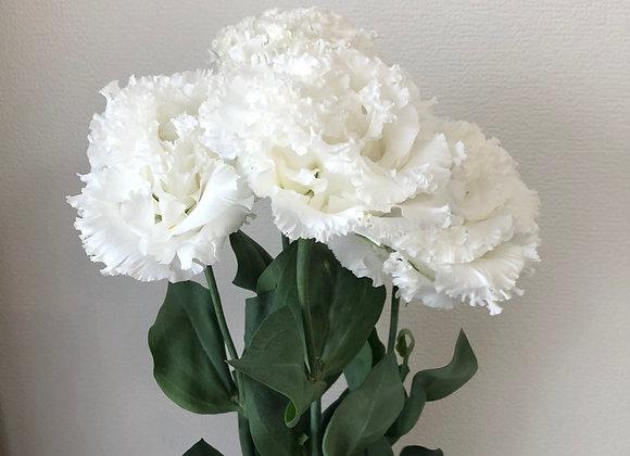 Lisianthus Fringe white