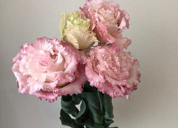 Lisianthus Japanse- Voyage Pink