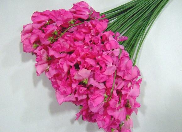 Ceremony Pink