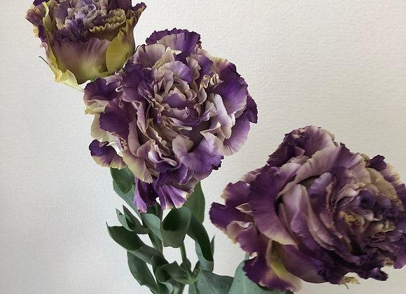 Lisianthus bicolor green/purple