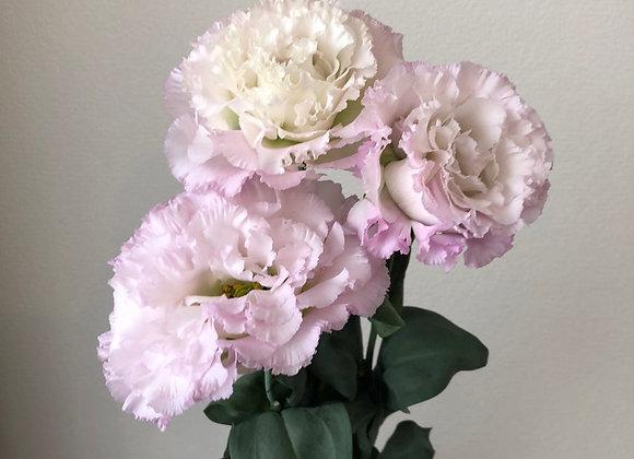 Lisianthus Light pink