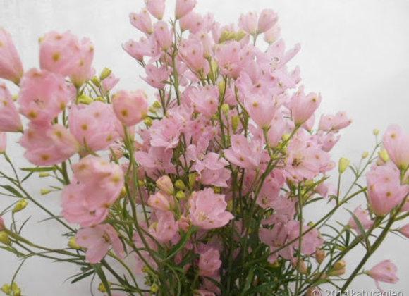 Delphinium Spray Pink