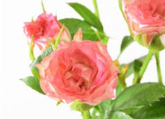 Pink Waltz