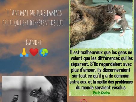 Message aux animaux de l'Uni-vers... ❤✨🌍