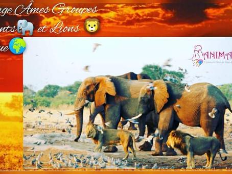 ✨Message de l'Âme groupe des Éléphants et des Lions pour l'humanité 🌍✨ 🐘 🦁