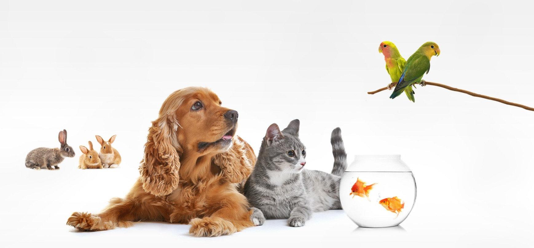 Communication animale de groupe