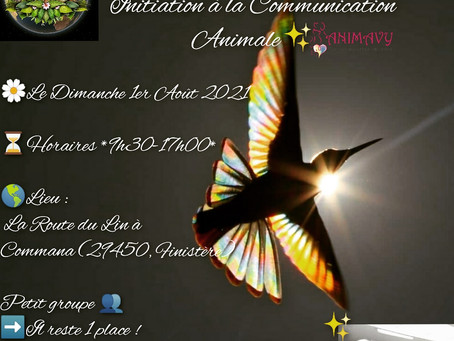 Date exceptionnelle Initiation C.A à Commana (29), le Dimanche 01/08/21, il reste 1 place ❤🐾😉