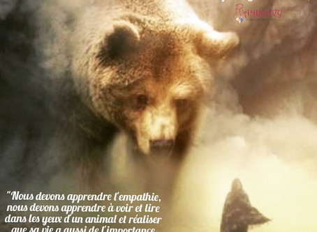 L'Ours, Esprit Guerrier 🦋✨🐻