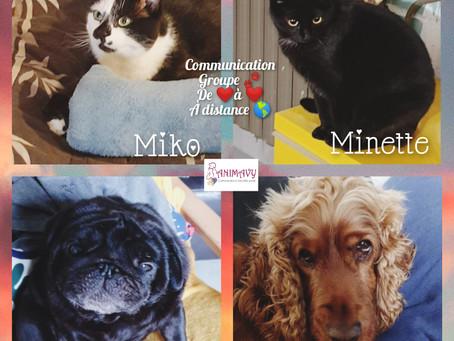 ✨Communication de groupe à distance✨ Je vous présente Miko, Minette, Jo et Fly  🥰🐾