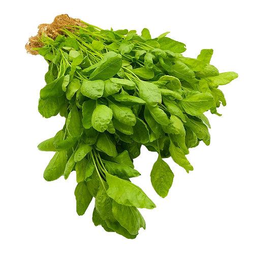 Green Amaranth Spinach