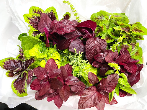 Gift of Greens Amaranth Spinach Vegetables Box (Medium)