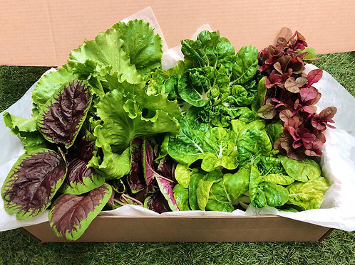 Gift of Greens Vegetables Box (5 types of vegetables)
