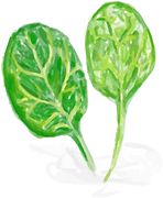 spinach water colour@4x.png