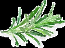 plant watercolour@4x.png
