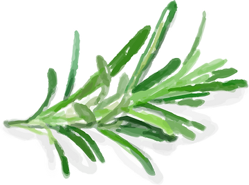 plant watercolour@4x.png