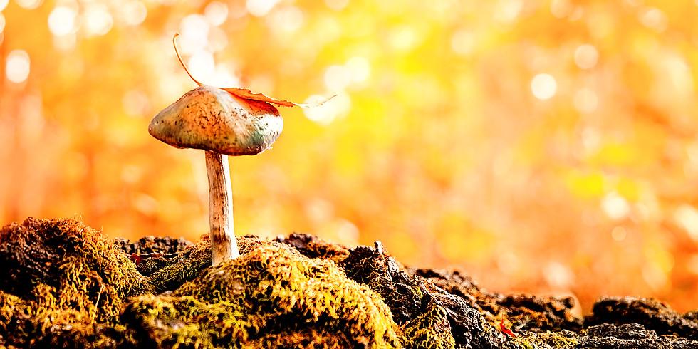 Mycelium Frequency Exploration