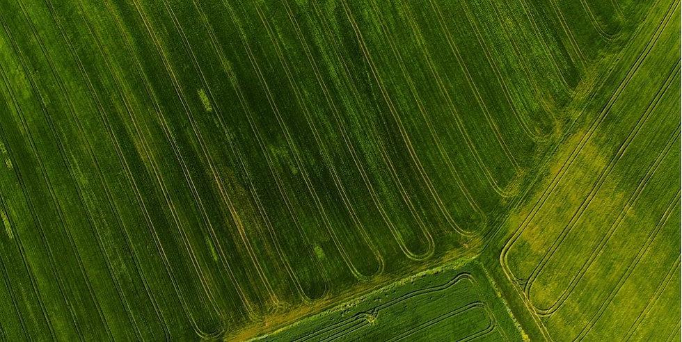 crop-rows-footers.jpg