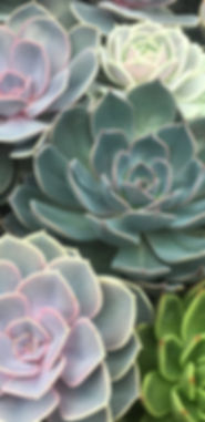 succulents not palmer house.jpg